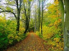 Επενδύσεις οι οποίες βελτιώνουν την ανθεκτικότητα και την περιβαλλοντική αξία των δασικών οικοσυστημάτων