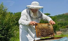 Μελισσοκομικό Πρόγραμμα